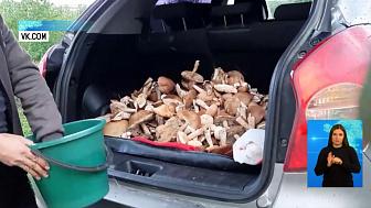 Четверо чебаркульцев отравились грибами