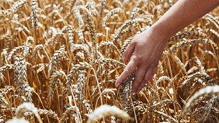 ВСК реализовала возможность страхования сельскохозяйственных культур на портале АГРОПЛАТФОРМА.РФ