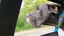 «Вареное сердце»: хозяйка убитой током на ЧМЗ собаки жаждет справедливости