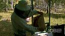 Это неправильные пчёлы? Южноуральские пасечники ощутили дефицит мёда