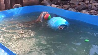 Выдра выполняет упражнения с мячом: видео из Челябинского зоопарка