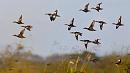 Южноуральских охотников просят не убивать птиц ради забавы