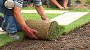 Более 100 деревьев высадили за неделю в Челябинске