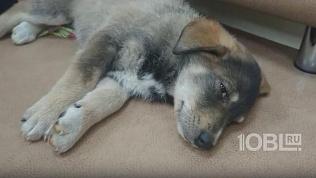 Доброе сердце: отзывчивый челябинец взялся за лечение больного щенка, которого подкинули в туалет офиса