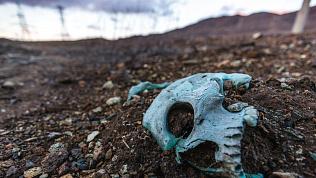 Неприятное соседство: школу возле скотомогильника планируют построить в Верхнеуральске