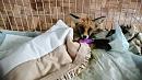 Сбитого лисенка спасли неравнодушные жители Златоуста