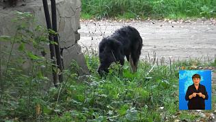 Следователи проверят историю о нападении пса