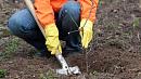 В Челябинске продолжаются работы по озеленению
