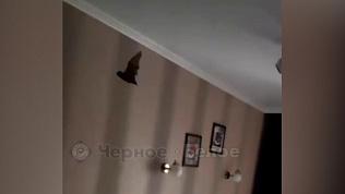 Летучая мышь спит на шторах: видео из Магнитогорска