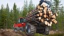 Владимир Путин недоволен положением дел в лесной отрасли