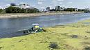 Очистка реки Миасс от растений может перерасти в уголовное дело