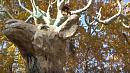 Домик хоббита и лох-несские чудовища появились в Каслях