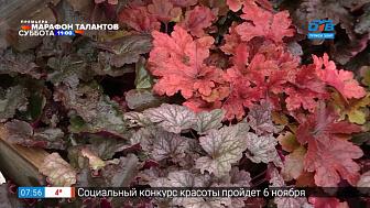 Руки садовода — Готовим гейхеры к зимовке