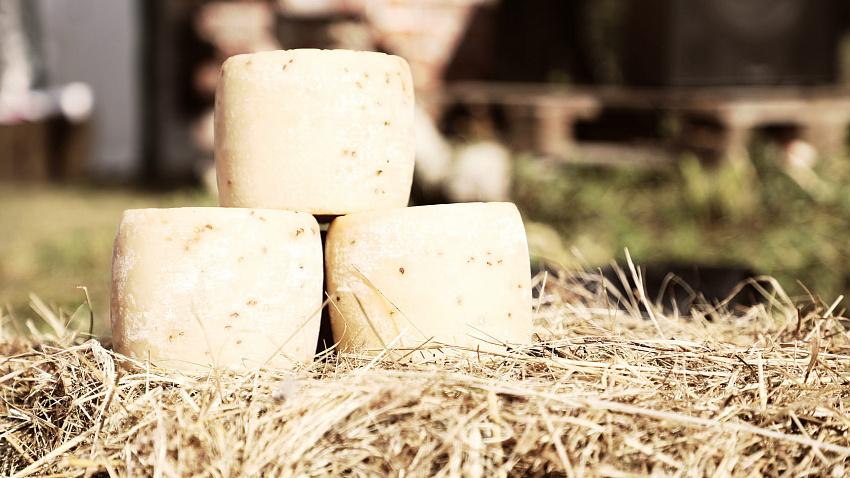 В Челябинской области создадут агротуристический центр с производством элитного сыра