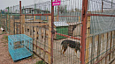 В Озёрске и Коркино бродячих животных будут отлавливать гуманно