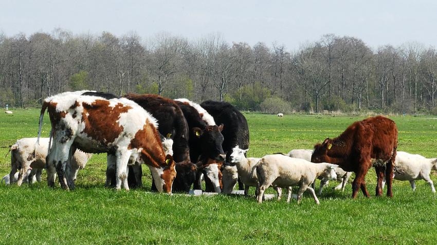 Южный Урал стал лидером страхования в сфере животноводства