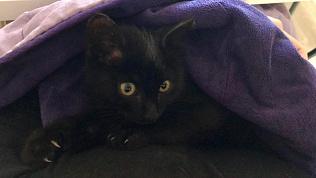 Котенок из Челябинска, потерявшийся впоезде, нашел дом вСанкт-Петербурге