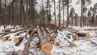Южноуральцам напомнили оштрафах занезаконный сруб деревьев