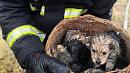 Девять щенков спасли пожарные изгорящего дома под Чебаркулём