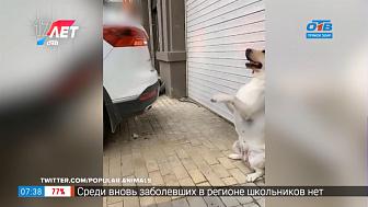 Все хвосты дома — Пёс-парковщик