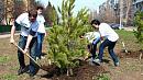 В этом году вЧелябинске высадили более 13 тысяч деревьев