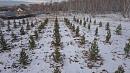3113 деревьев высадили вМеталлургическом районе Челябинска