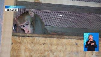 Зоозащитник приютил цирковую обезьяну