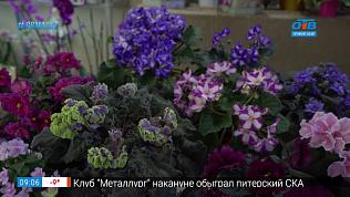 Руки садовода — Как правильно пересаживать фиалки