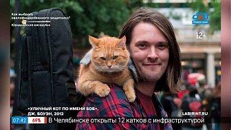Читать — не перечитать — Книги о кошках