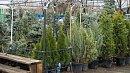 Работа семи незаконных елочных базаров пресечена вЧелябинске