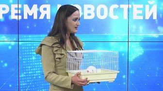 Марианна Лысенко