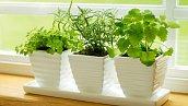 Свежая зелень вдомашних условиях— инструкция повыращиванию