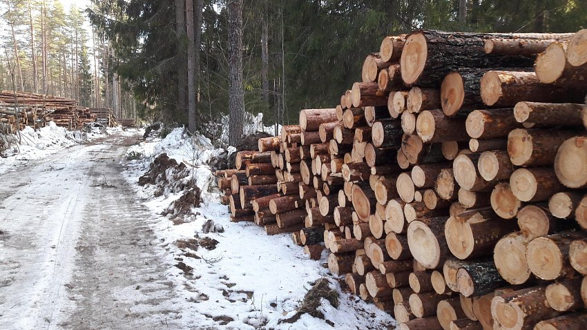 Экспорт леса из Челябинской области сократился в два раза