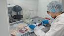 Стволовые клетки помогут медикам изЧелябинска лечить артроз