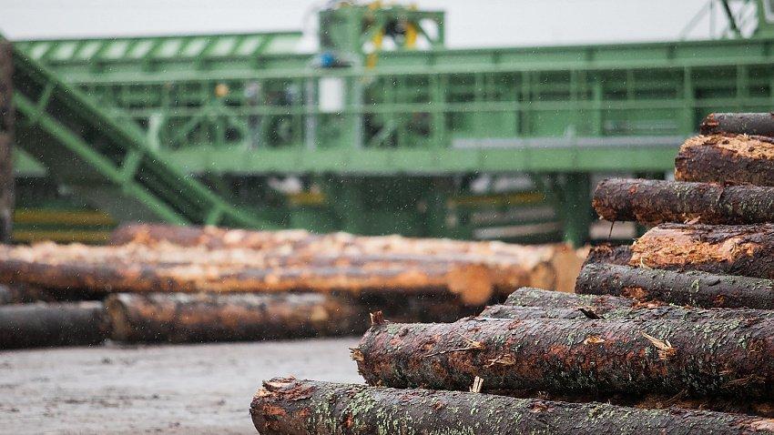 Лесопромышленники Челябинской области смогут получить заем до 500 млн рублей