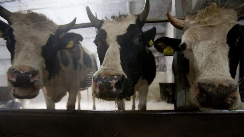 В Челябинской области изменились правила получения аграриями субсидий