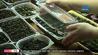 Руки садовода — Чем заняться садоводу в феврале