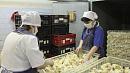 Андрей Косилов остановил производство мяса птицы на«Среднеуральской» фабрике