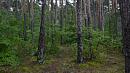 В Челябинской области вести лесное хозяйство будут эффективнее