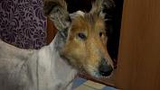 Кинолог изЗлатоуста спас найденного наобочине замерзающего пса