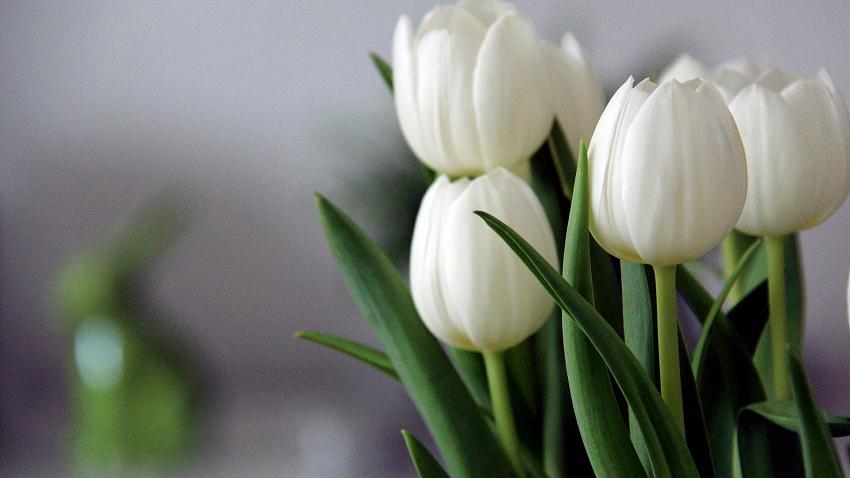 В Челябинской области в 5,5 раза выросли продажи цветов перед 8 марта