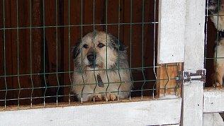 В Челябинске проверили исполнение контракта поотлову бездомных животных