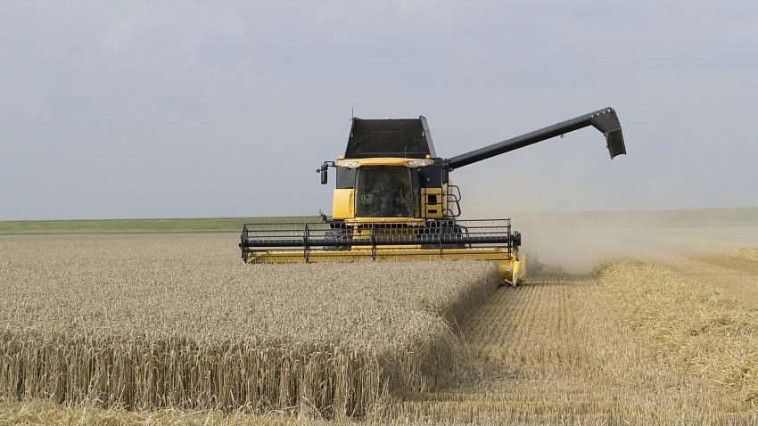 Продажи пшеницы в Челябинской области снизились на 60%