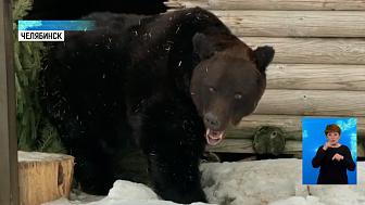В зоопарке из спячки вышел медведь Степан
