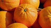 Из-за мухи вЧелябинской области уничтожат семь тонн апельсинов