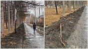 «Экоцид»: вчелябинском сквере ради прокладки кабеля обрубили корни деревьев