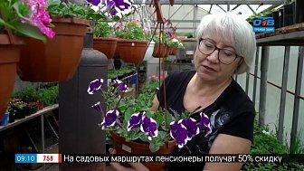 Руки садовода — «Звёздные» сорта петунии
